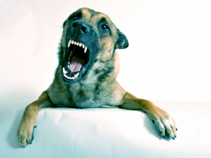 When dangerous animals attack, contact a Pine Bluff Dog Bite Attorney to learn your rights.